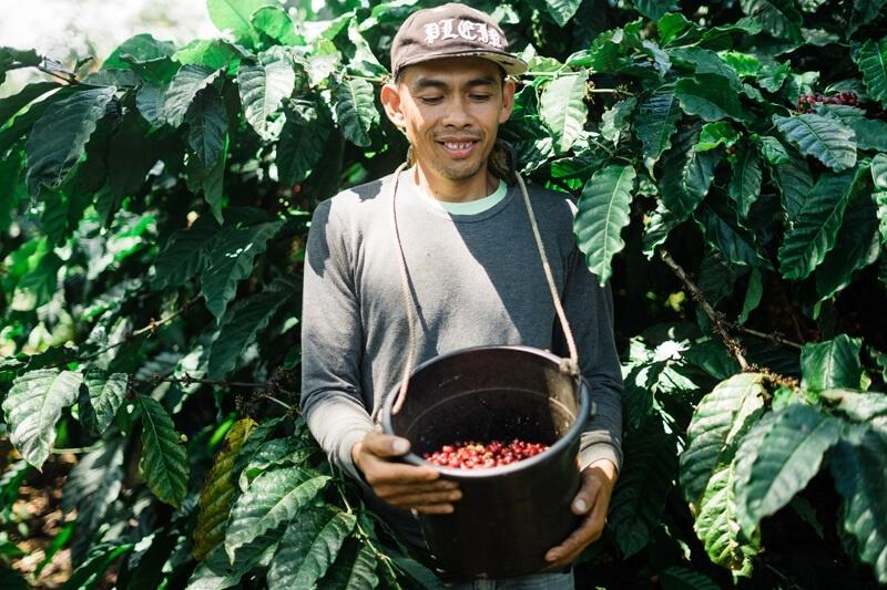 organic coffee farmer